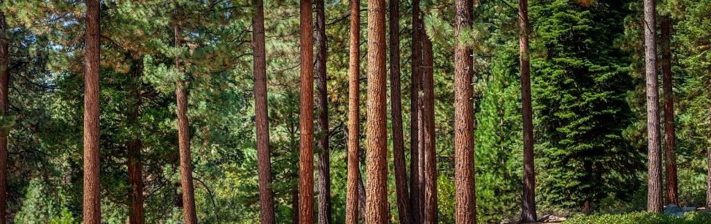Tree-Pano.jpg